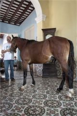 Julio, our guide in Trinidad has his horse house-trained