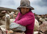 Lama Lady - Peru