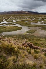 Interesting Marshy Landscape - near Colca Valley