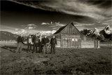 The Gang - Dutch Barns