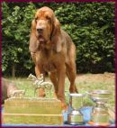 Defiant with Trophies won in 2005