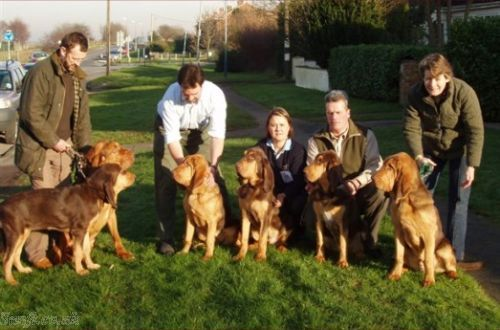 Defiant's 5 month-old Cammonstone puppies