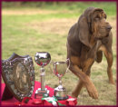 Jade with BC Champ Show 2017 trophies