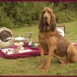 Emerald with Crufts Trophies
