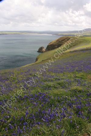 Dinas Island, Pembrokeshire