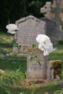 Churchyard, Heytesbury