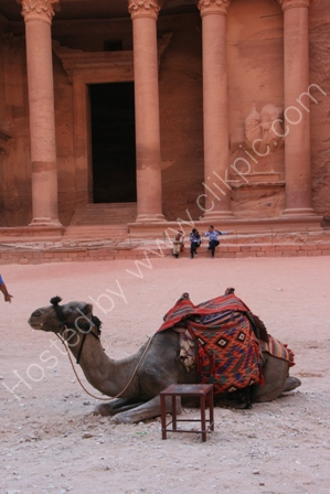 Camel at the Treasury,Petra