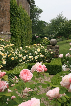 Rose Garden in Somerset