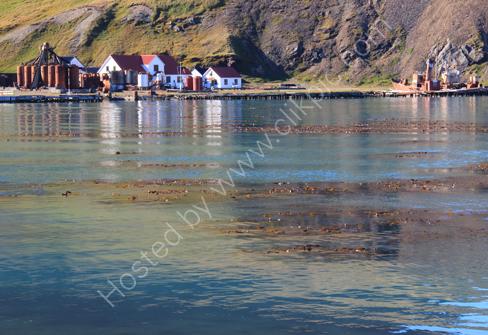 Harbour, Grytviken