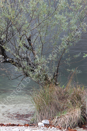 Beside Lake Bohine