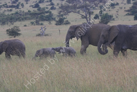 Young Elephants in the Serengeti