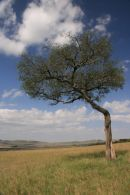 Landscape in the Serengeti