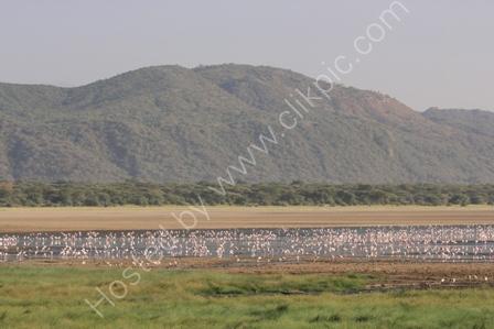 Flamingoes on Lake Manyara