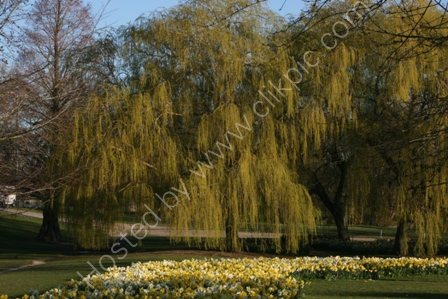 Spring in Salisbury
