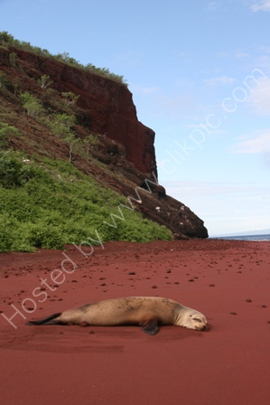 Sealion, Rabida Island