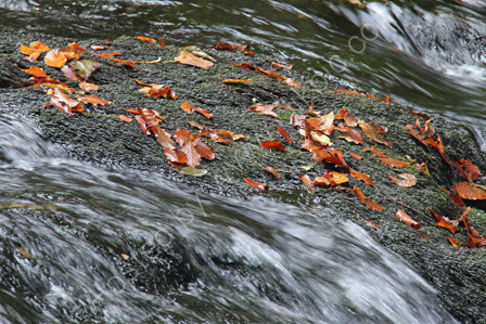 Swirling waters and autumn leaves
