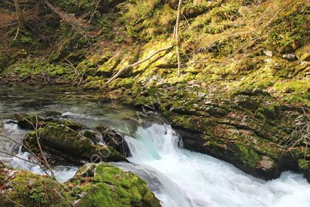 Radovna River in Vintgar Gorge