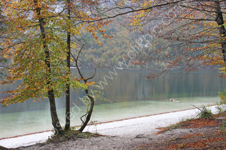 Lake Bohine in autumn