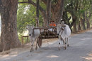Bullock Cart at Inwa