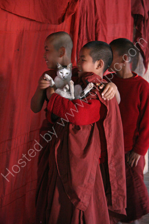 Novice Monks with Cat