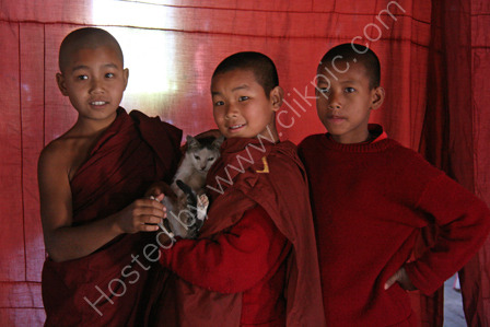 Novice Monks with their Pet Cat