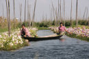 Picking Flowers on Floating Gardens