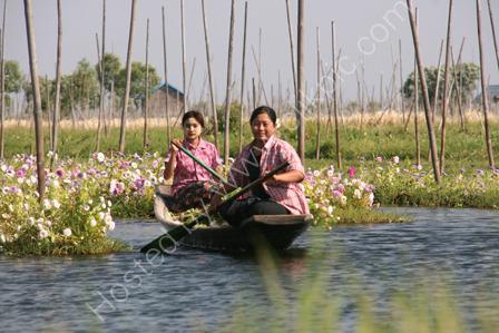 Burmese Ladies in Floating Flower Garden