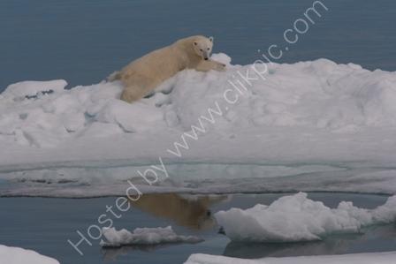 Polar Bear Reclining on Iceberg