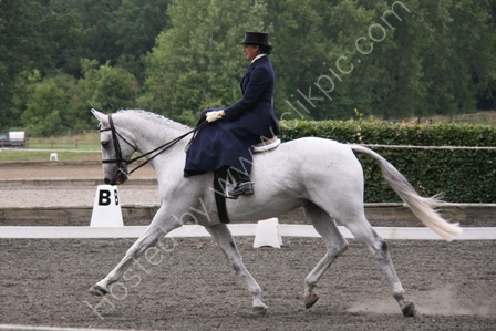 Extended Trot in a Dressage Class