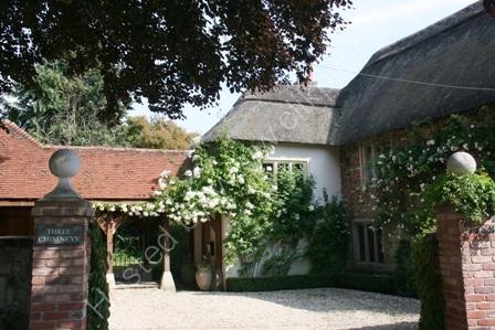 Roses at Three Chimneys