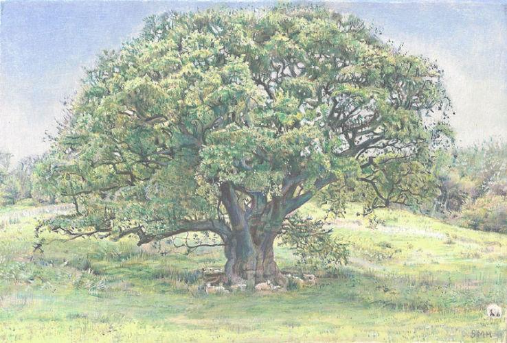 Oak Tree and Sheep