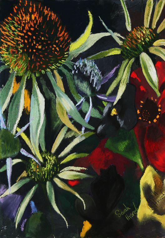 Echinacea 1 - Copy