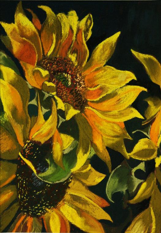 sunflower small