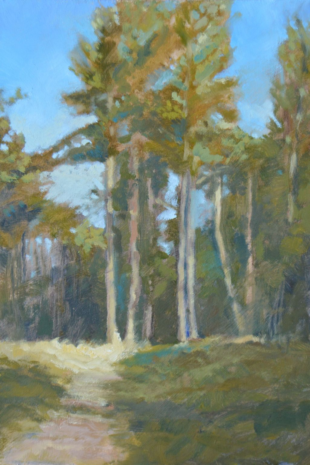 Pines at Fineshade (currently on exhibition at Stamford Arts Centre priced £165 framed)