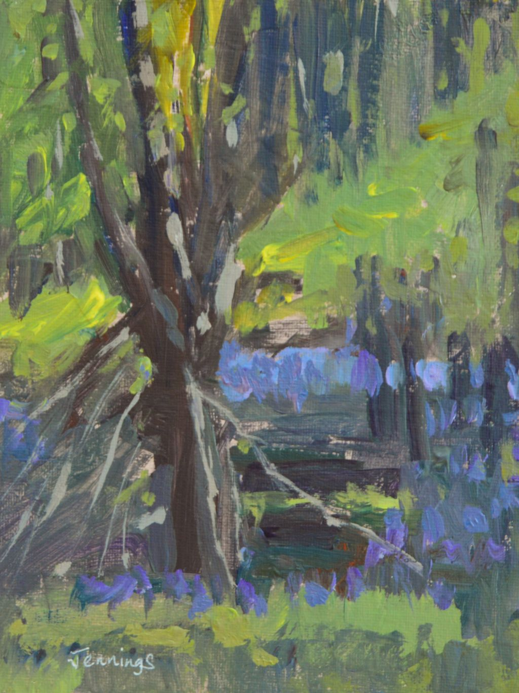 Tree amongst the Bluebells £50