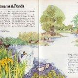 Streams & Ponds
