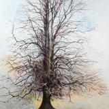 Dormant Tree SOLD