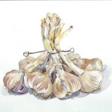 Garlic Twist - SOLD