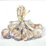 Garlic Twist - SOLD