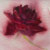 Single Rose  SOLD