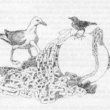 Sparrow & Gull - illustration