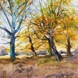 Richmond Park Autumn
