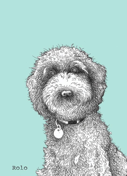 Pen drawings of pets