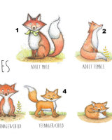 Fox choices for family prints