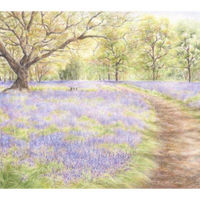 'Bluebell Woods'