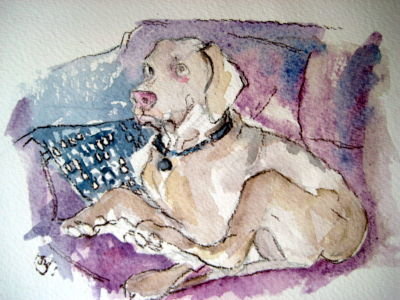 Dog on a Settee - 2013