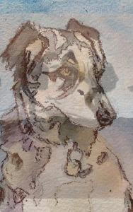 Commission dog 2015