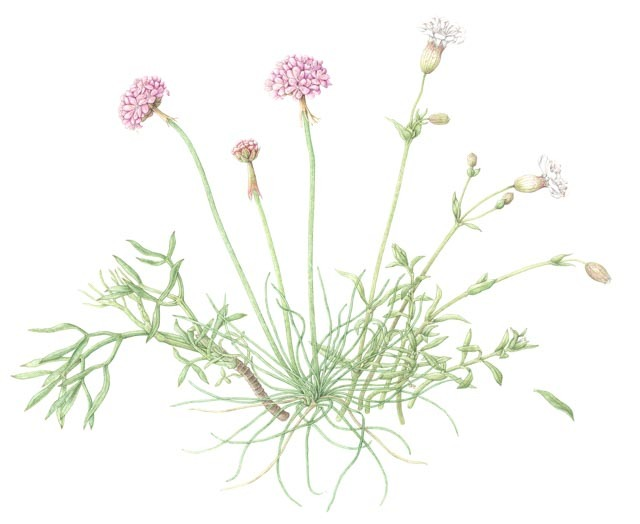 Dartmouth coastal flowers- River Dart Series