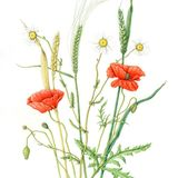 Farmland Plants- River Dart Series