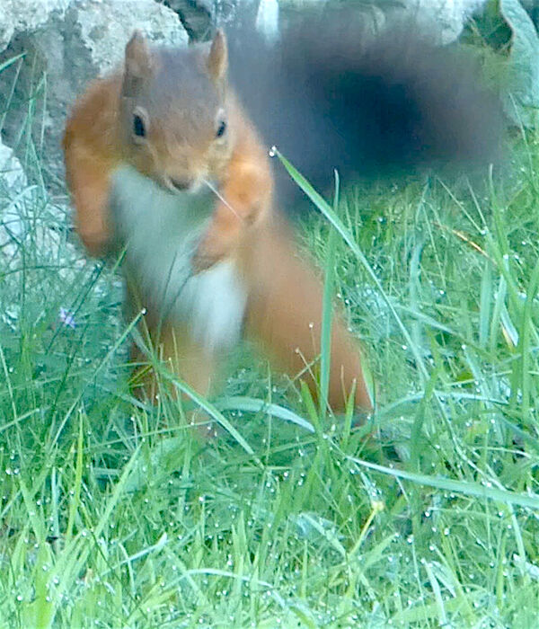 Lively squirrel